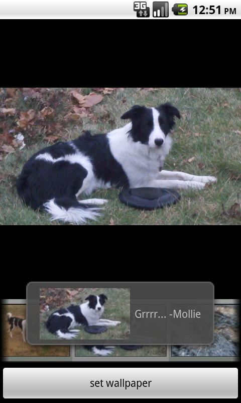 Droid Disk Dogs Android Personalization