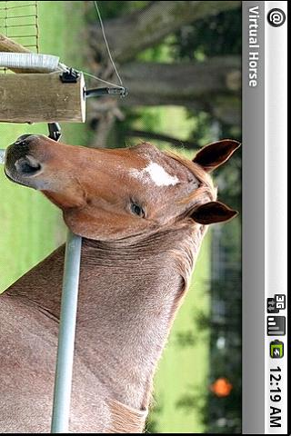 Virtual Horse Android Media & Video