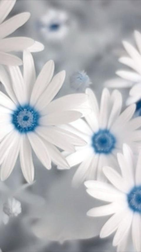Flower Love Wallpapers Android Personalization