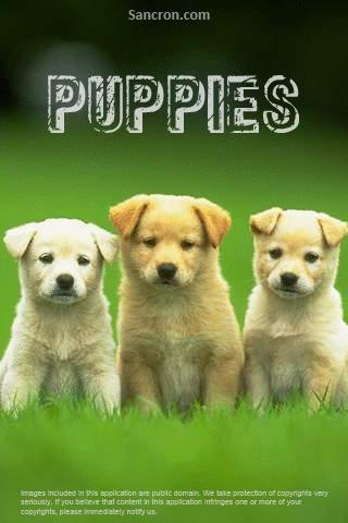 Cute Puppies Wallpapers Android Personalization