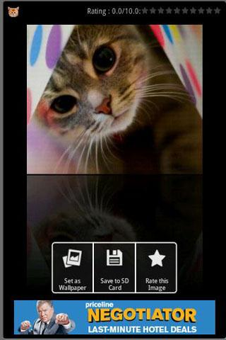 Cute Cats Wallpapers Android Themes