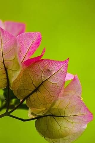 Autumn Color Wallpaper 3 Android Themes