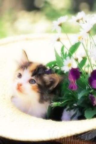 lovely cat offical wallpaper Android Themes