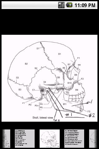 Skull –   IMAGE Flashcards Android Health