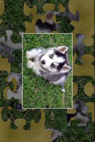 Puppies (real jigsaw puzzles) Android Brain & Puzzle