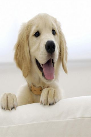 Funny Puppy Wallpaper Android Cards & Casino