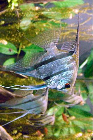 Tropical Fish Crazy Android Casual