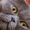 Cat 4-Ever Wallpapers Vol.II