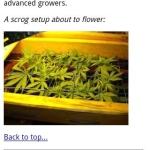 Medical Marijuana GrowApp Full