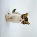 CatWallpaperV3