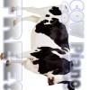 Cow Piano Free