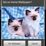 Pets & Animals Wallpapers Lite