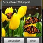 Flowers Wallpapers Lite