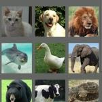 Animal Voice
