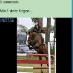Dagens Hestbild