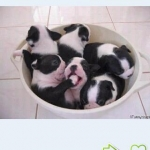 Funny dog & puppies