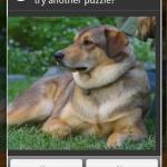 Perplex Puzzles  Dogs!