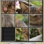 Slide Cat Puzzle