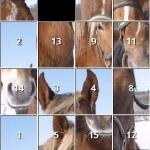 iSlider Horse Slide Puzzles
