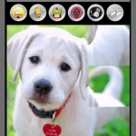 Puppies and Kittens Puzzles