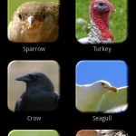 Birds Fun